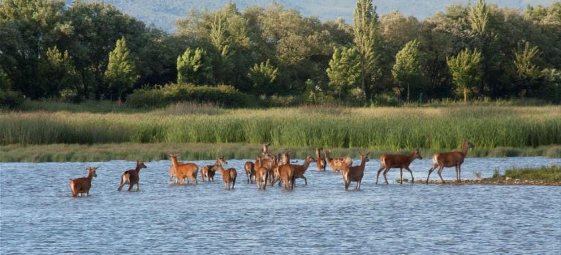 Anillo Verde de Vitoria-Gasteiz – Parque de Salburua